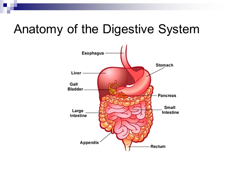 short essay on human digestive system Digestive system summary starting at the mouth, the digestive system helps provide the energy your body needs to perform its many functions upon entry into a person's mouth, the teeth cut, tear, crush and grind food.