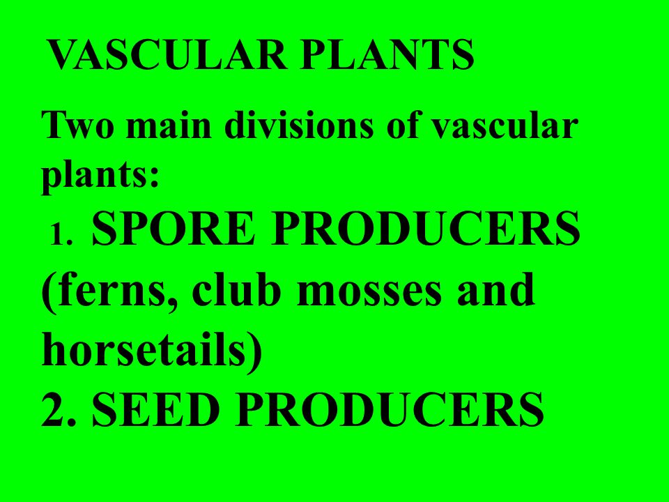 2. SEED PRODUCERS VASCULAR PLANTS
