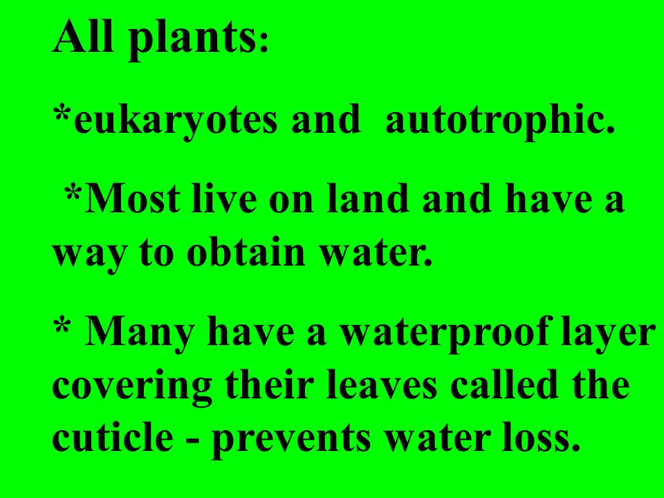 All plants: *eukaryotes and autotrophic.
