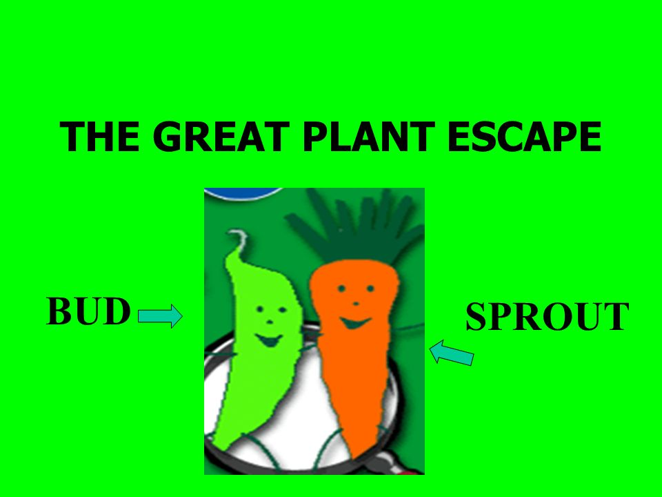 THE GREAT PLANT ESCAPE BUD SPROUT