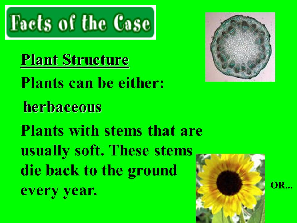 Plant Structure Plants can be either: