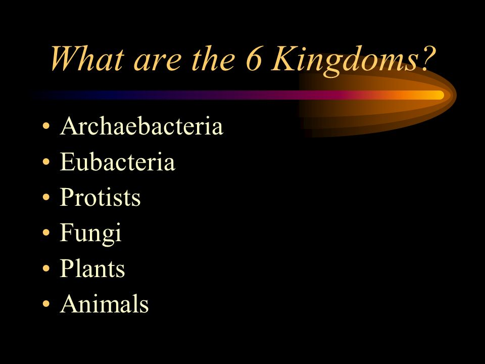 What are the 6 Kingdoms Archaebacteria Eubacteria Protists Fungi
