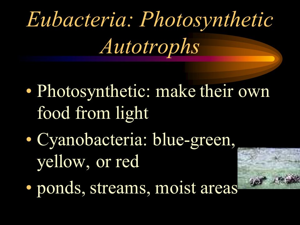 Eubacteria: Photosynthetic Autotrophs