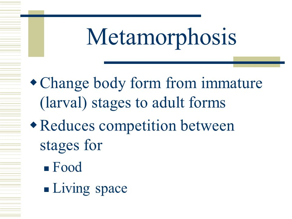 Metamorphosis Change body form from immature (larval) stages to adult forms. Reduces competition between stages for.