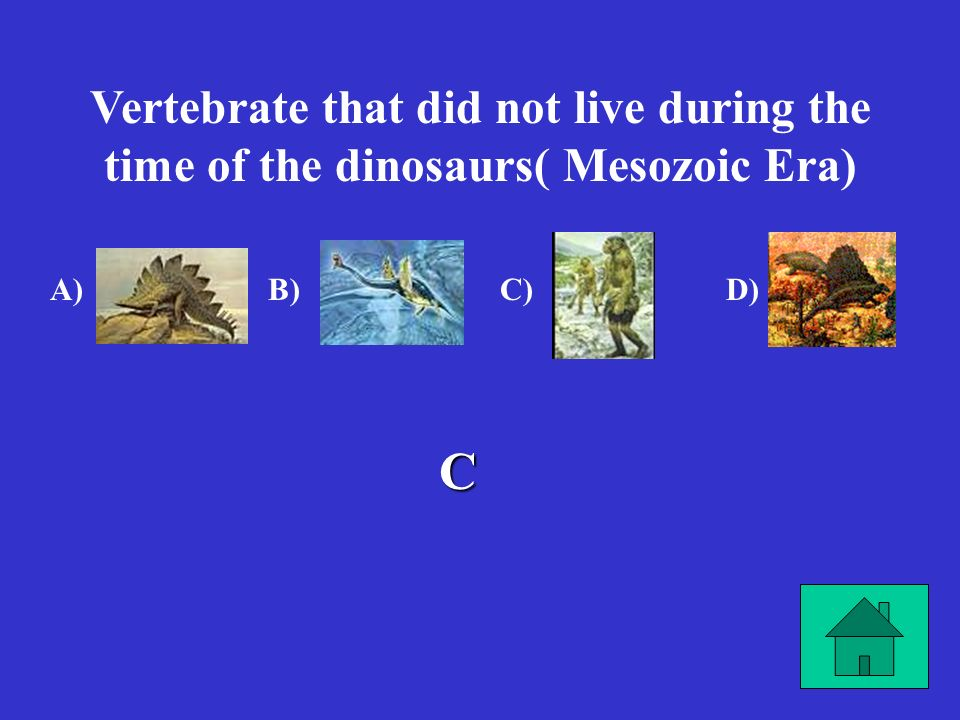 Vertebrate that did not live during the time of the dinosaurs( Mesozoic Era)