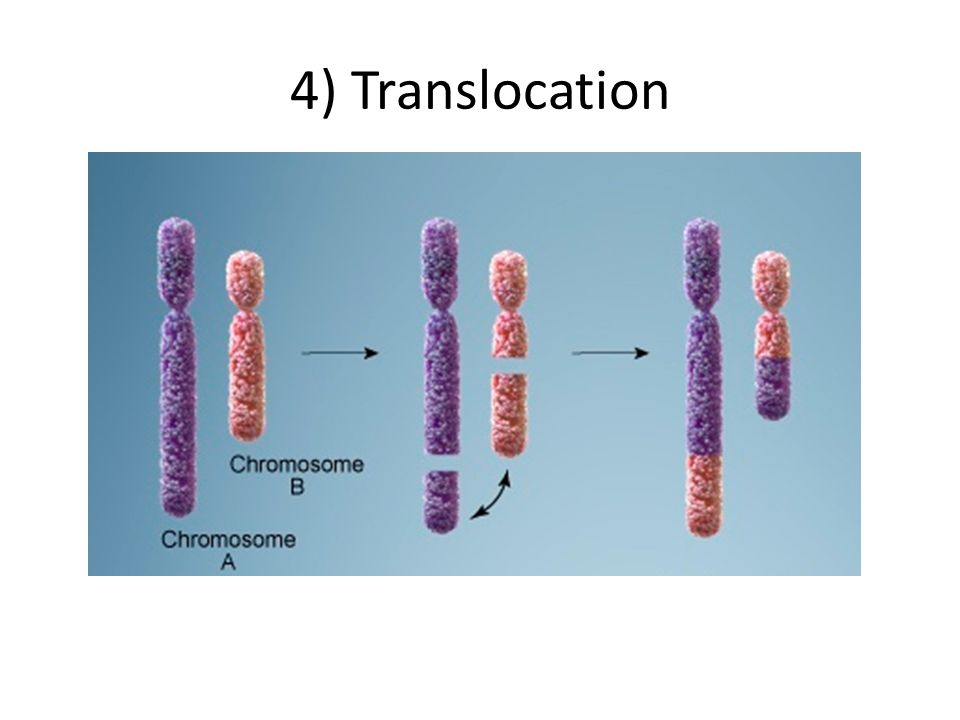 4) Translocation