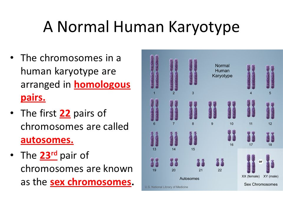 A Normal Human Karyotype