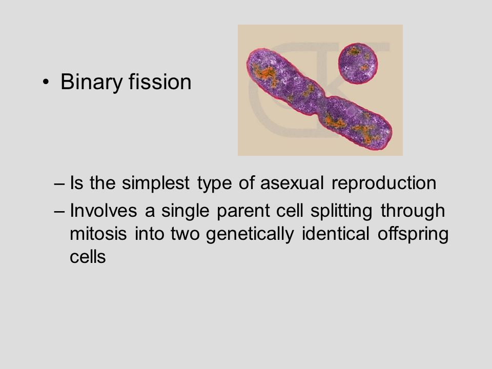 Binary fission Is the simplest type of asexual reproduction