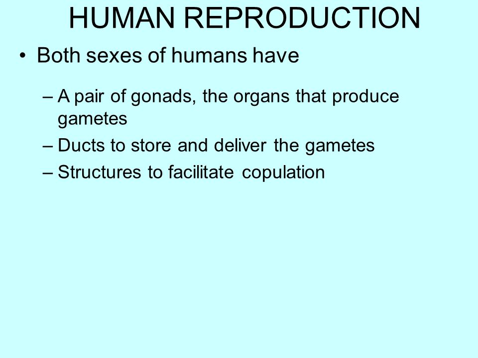 HUMAN REPRODUCTION Both sexes of humans have