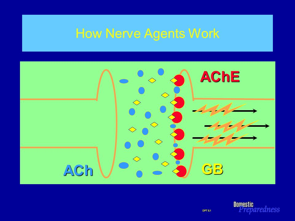 AChE GB ACh How Nerve Agents Work HOW NERVE AGENTS WORK