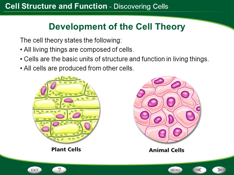 view of the cell essay The lives of a cell (national award winning book) notes of a biology watcher lewis thomas we are told that the trouble with modern man is that he has been trying to detach himself from nature.