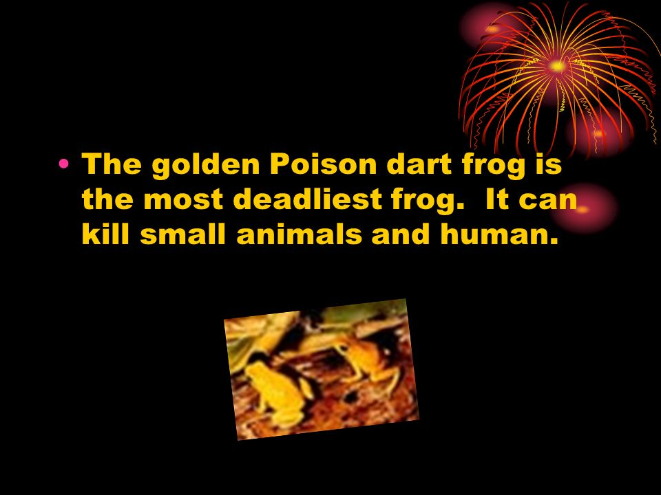The golden Poison dart frog is the most deadliest frog