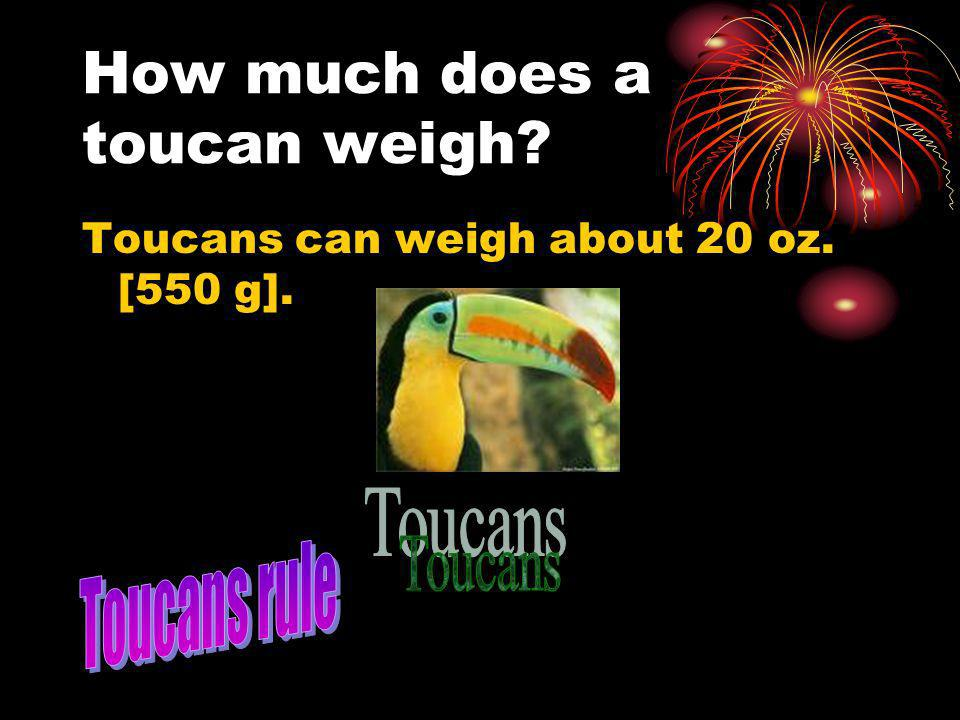 How much does a toucan weigh