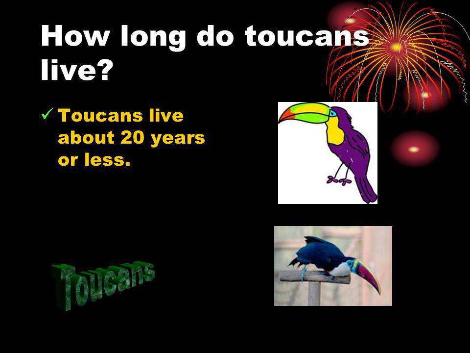 How long do toucans live