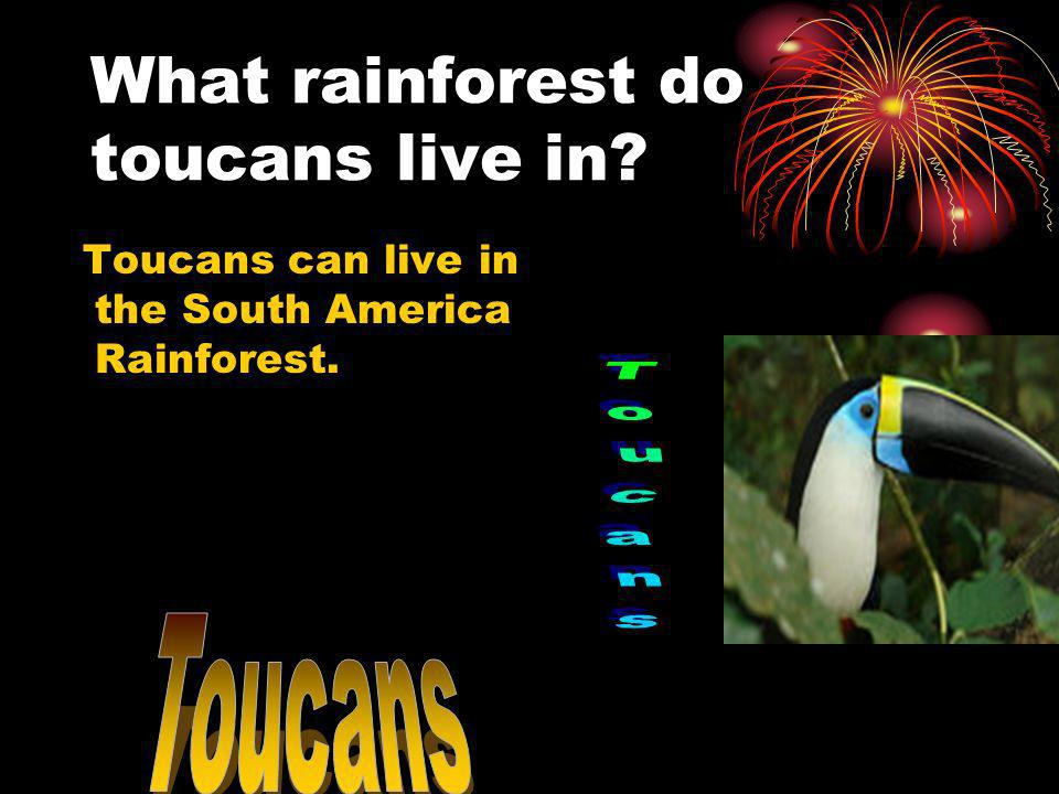 What rainforest do toucans live in