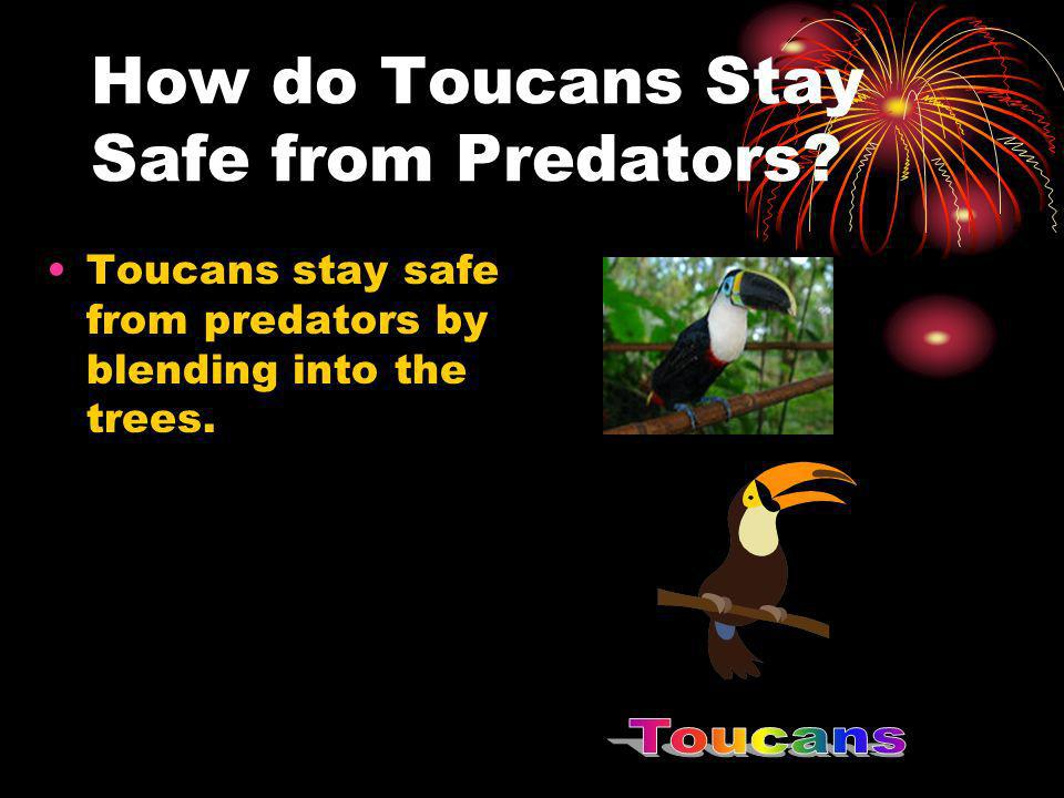How do Toucans Stay Safe from Predators