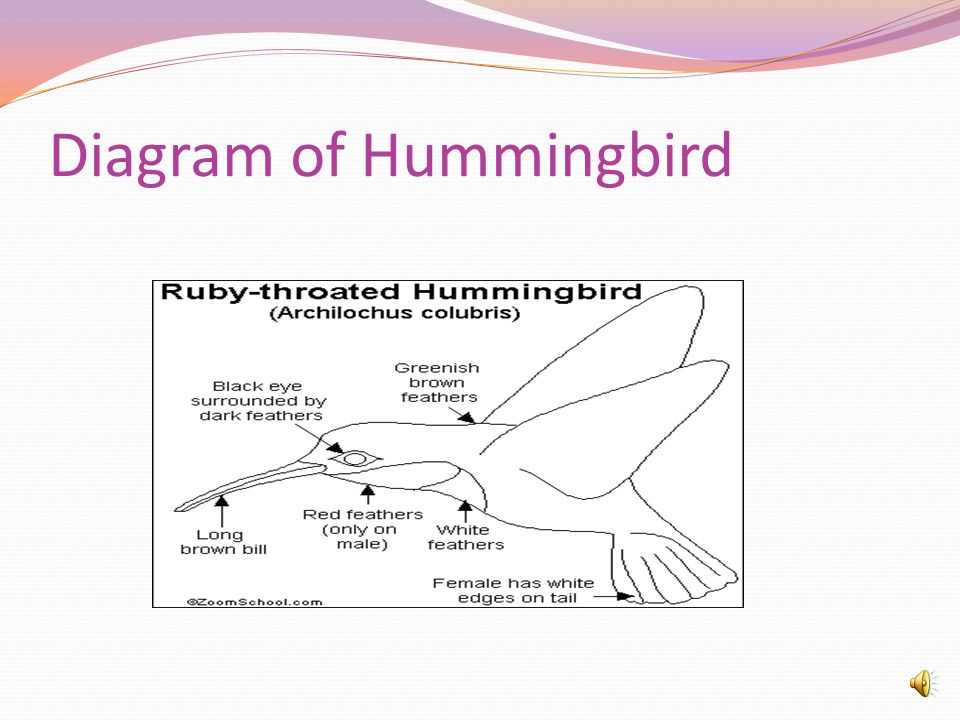 Diagram of Hummingbird