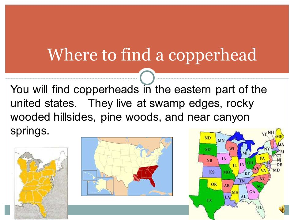 Where to find a copperhead
