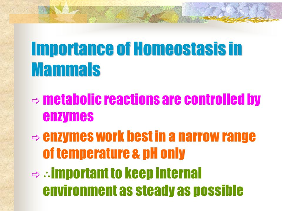 what is the importance of homeostasis