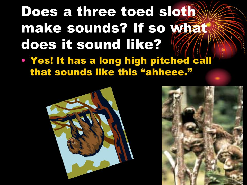 Does a three toed sloth make sounds If so what does it sound like