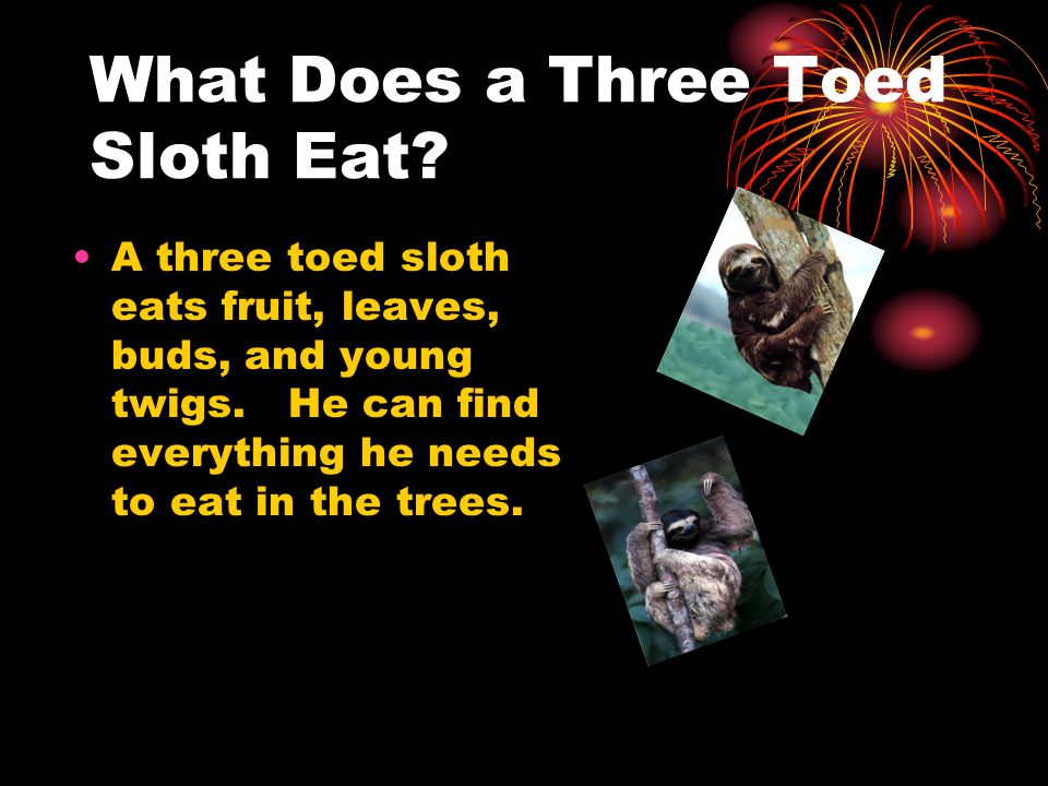 What Does a Three Toed Sloth Eat