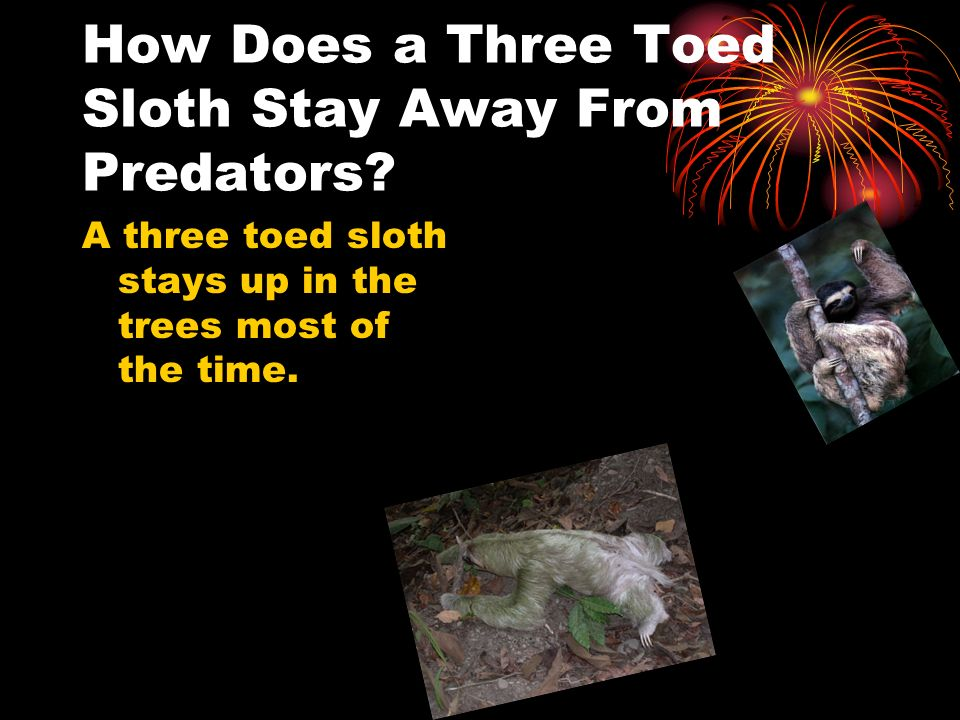 How Does a Three Toed Sloth Stay Away From Predators