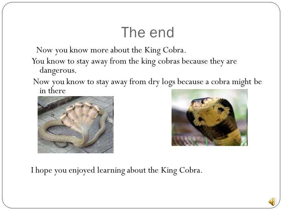 The end Now you know more about the King Cobra. You know to stay away from the king cobras because they are dangerous.