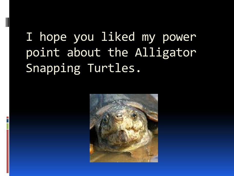 I hope you liked my power point about the Alligator Snapping Turtles.