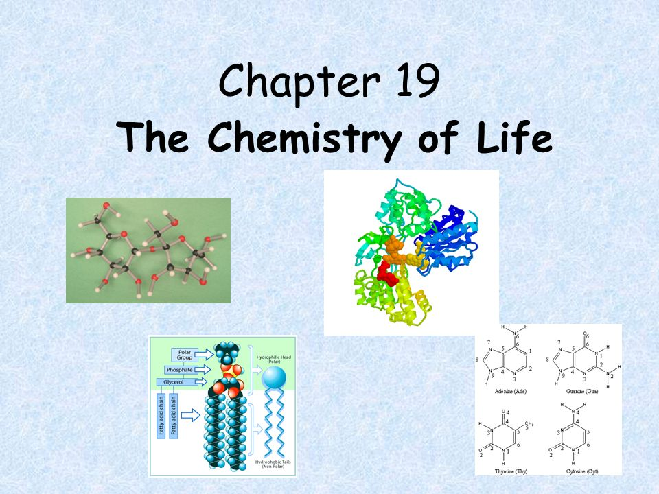Chapter 19 The Chemistry of Life