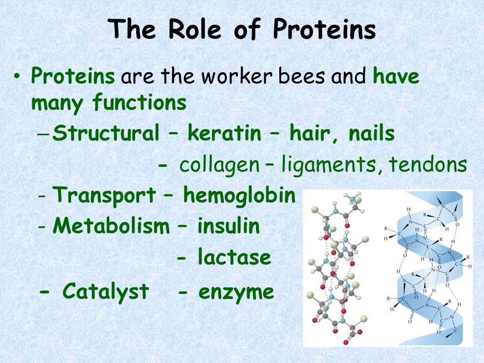 The Role of Proteins - Catalyst - enzyme