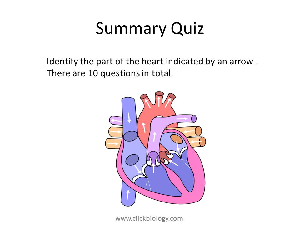 Summary Quiz Identify the part of the heart indicated by an arrow .