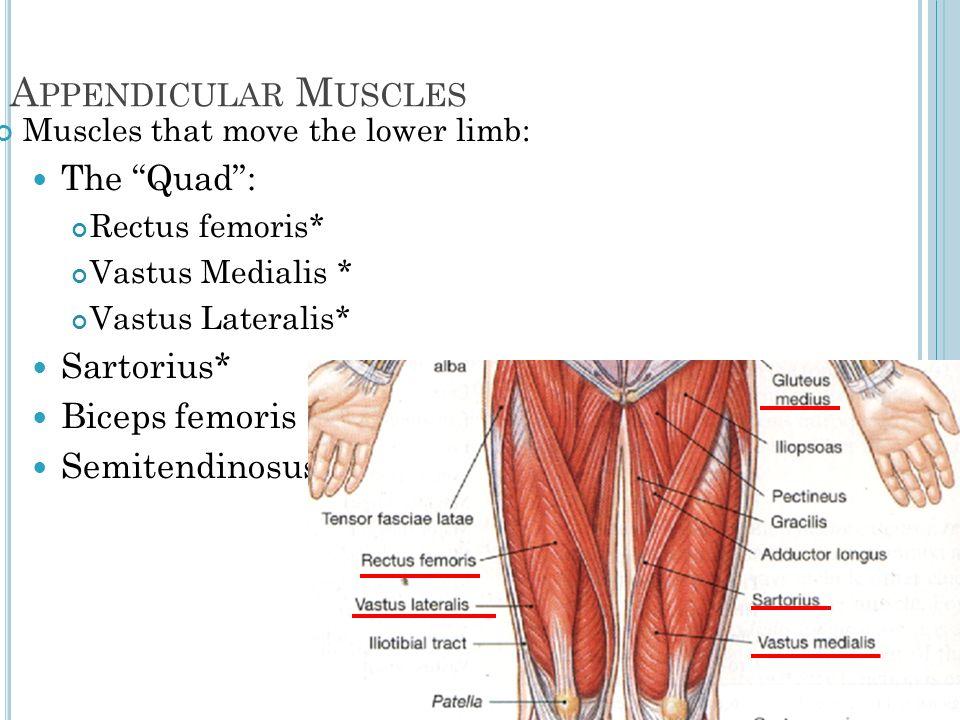 Organization of Skeletal Muscle - ppt video online download