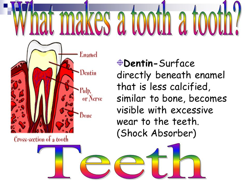 What makes a tooth a tooth