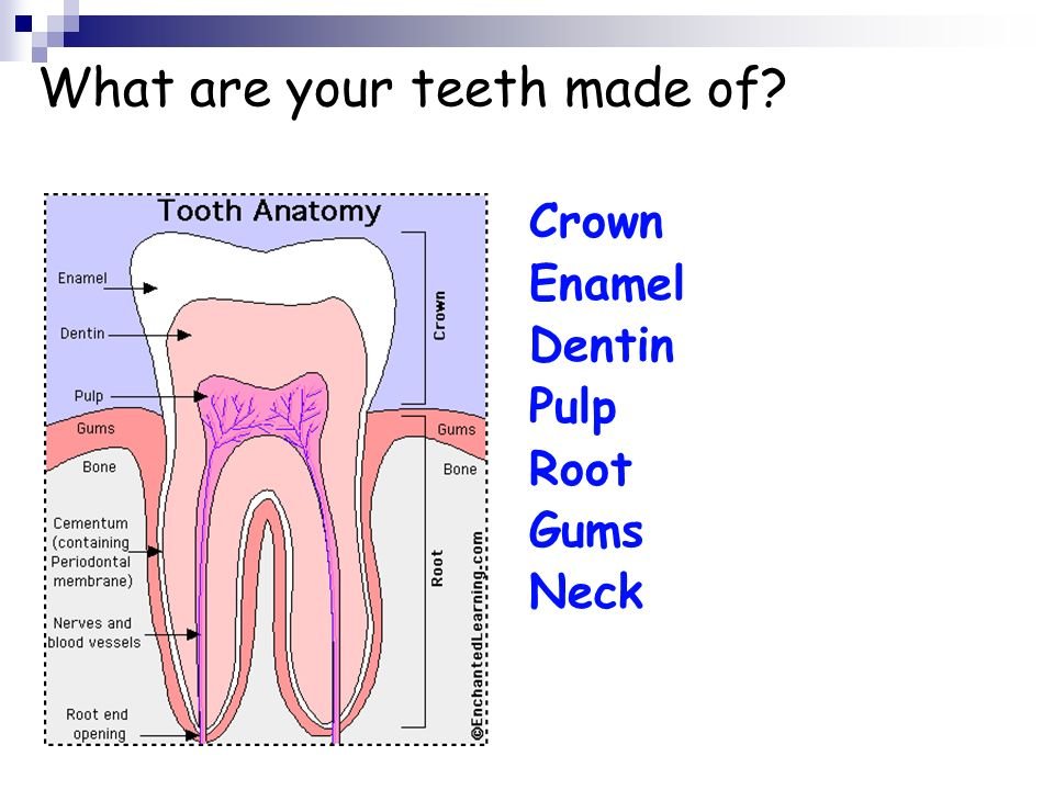 What are your teeth made of