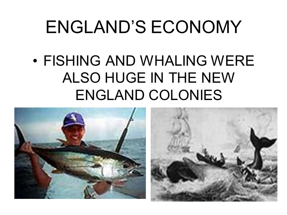 FISHING AND WHALING WERE ALSO HUGE IN THE NEW ENGLAND COLONIES