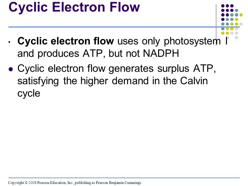 Cyclic Electron Flow Cyclic electron flow uses only photosystem I and produces ATP, but not NADPH.