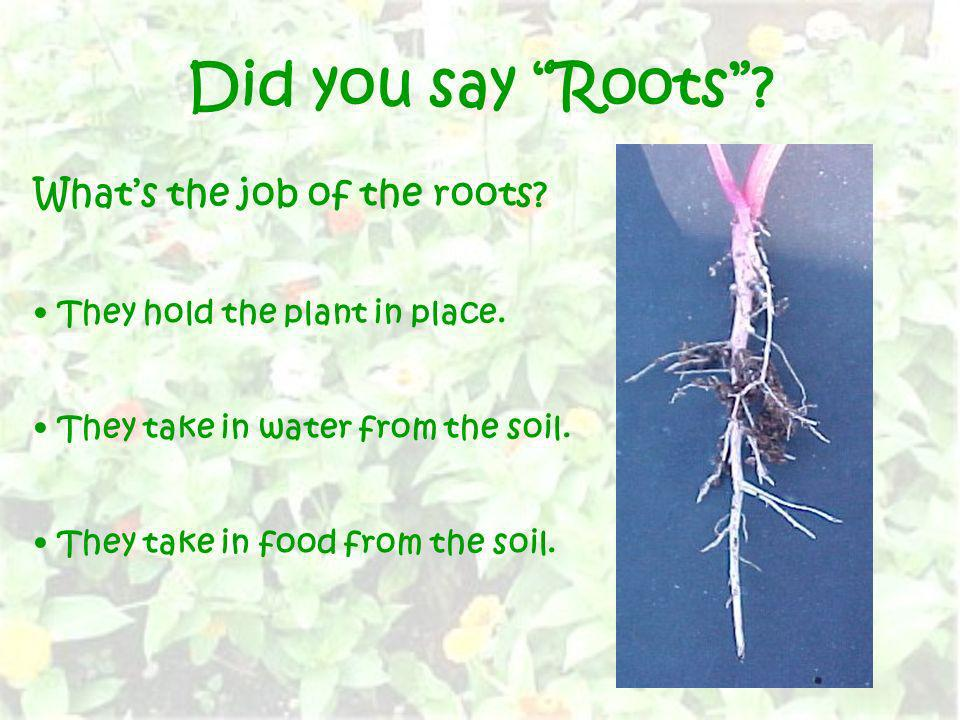 Did you say Roots What's the job of the roots