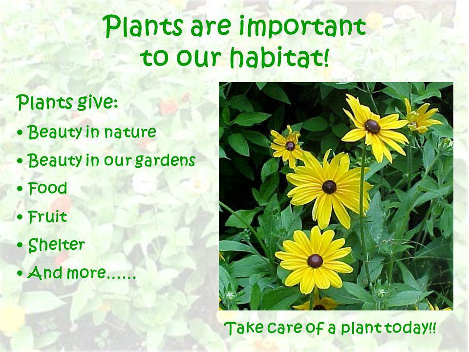 Plants are important to our habitat!