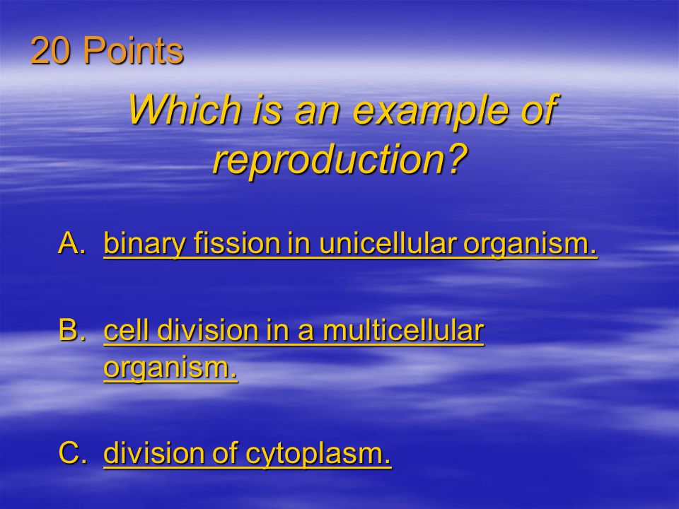 Which is an example of reproduction