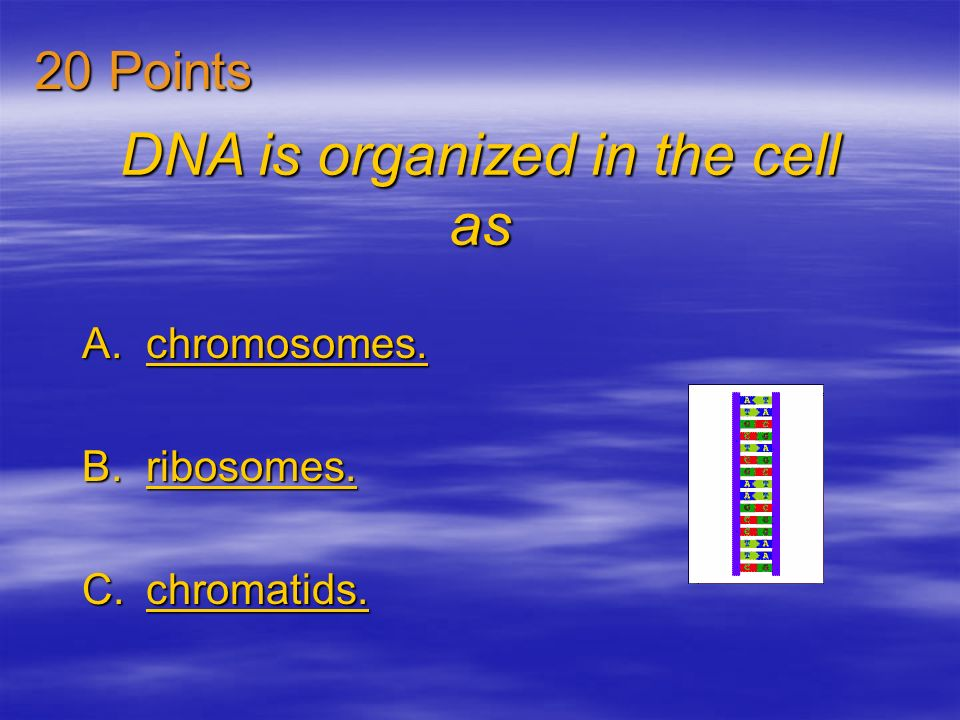 DNA is organized in the cell as