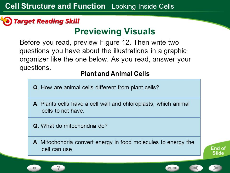 Table Of Contents Discovering Cells Looking Inside Cells Ppt Download