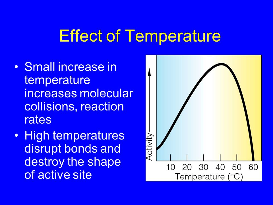 Effect of Temperature Small increase in temperature increases molecular collisions, reaction rates.