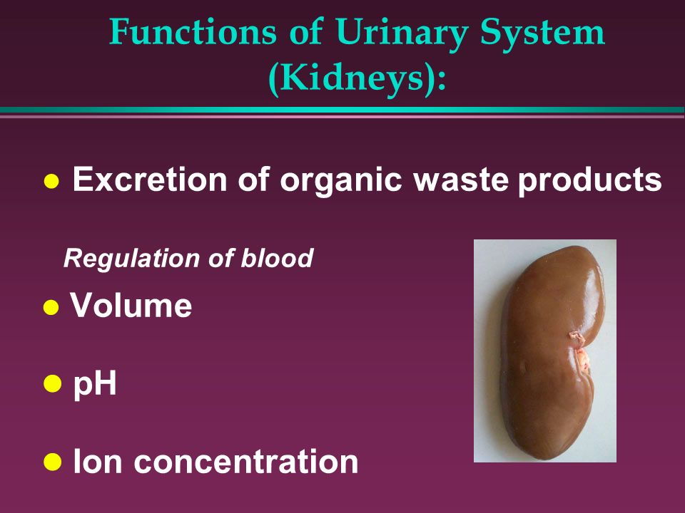 Functions of Urinary System (Kidneys):