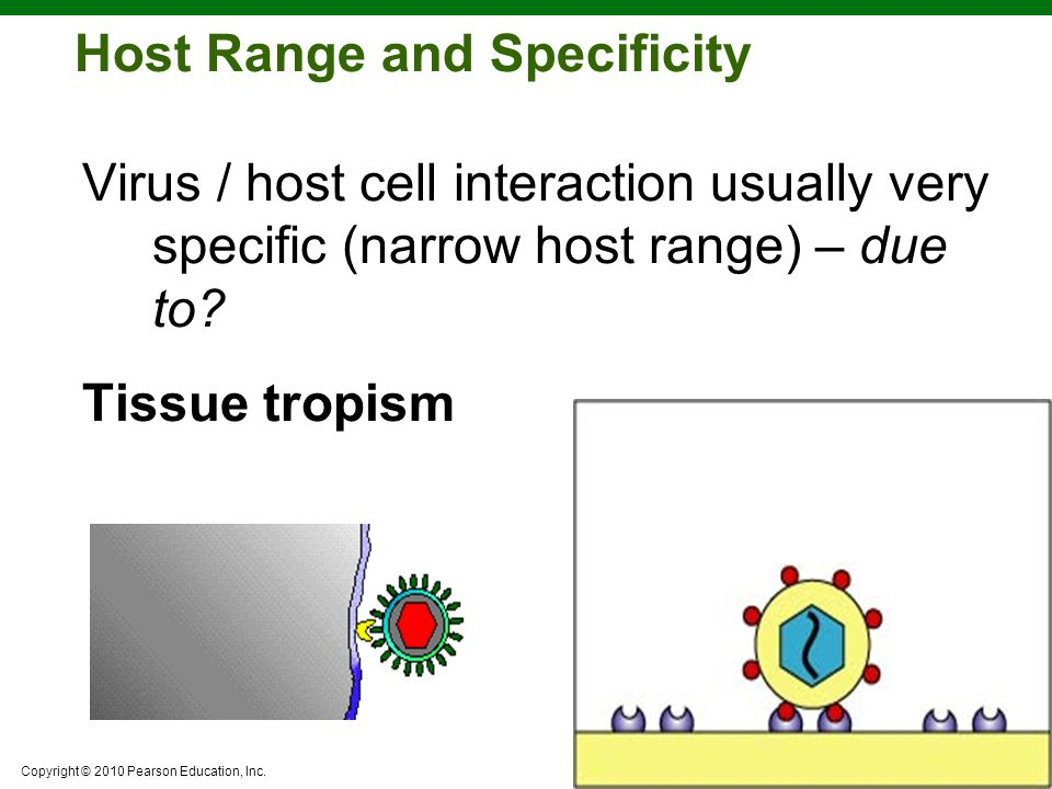 Host Range and Specificity