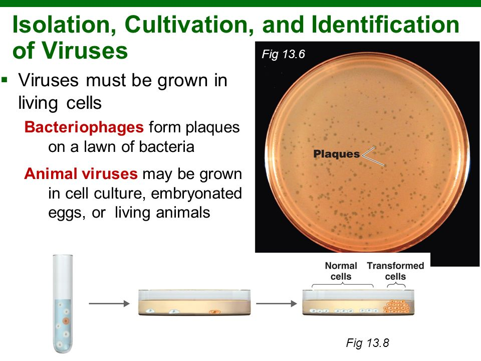 Isolation, Cultivation, and Identification of Viruses