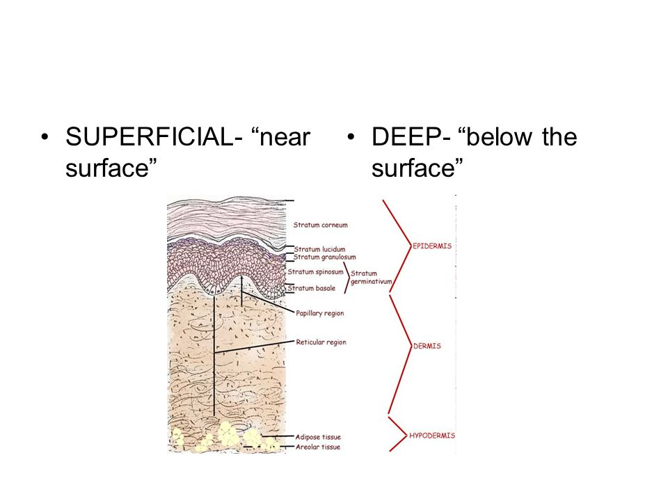 SUPERFICIAL- near surface