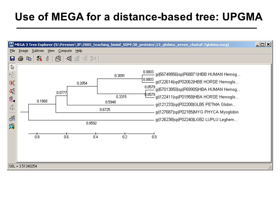 Use of MEGA for a distance-based tree: UPGMA
