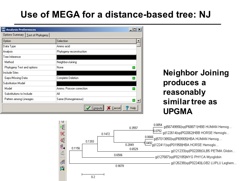 Use of MEGA for a distance-based tree: NJ