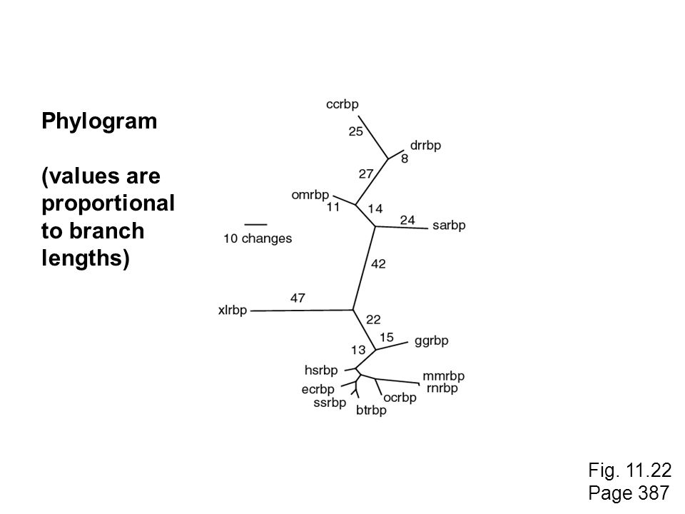 Phylogram (values are proportional to branch lengths) Fig. 11.22