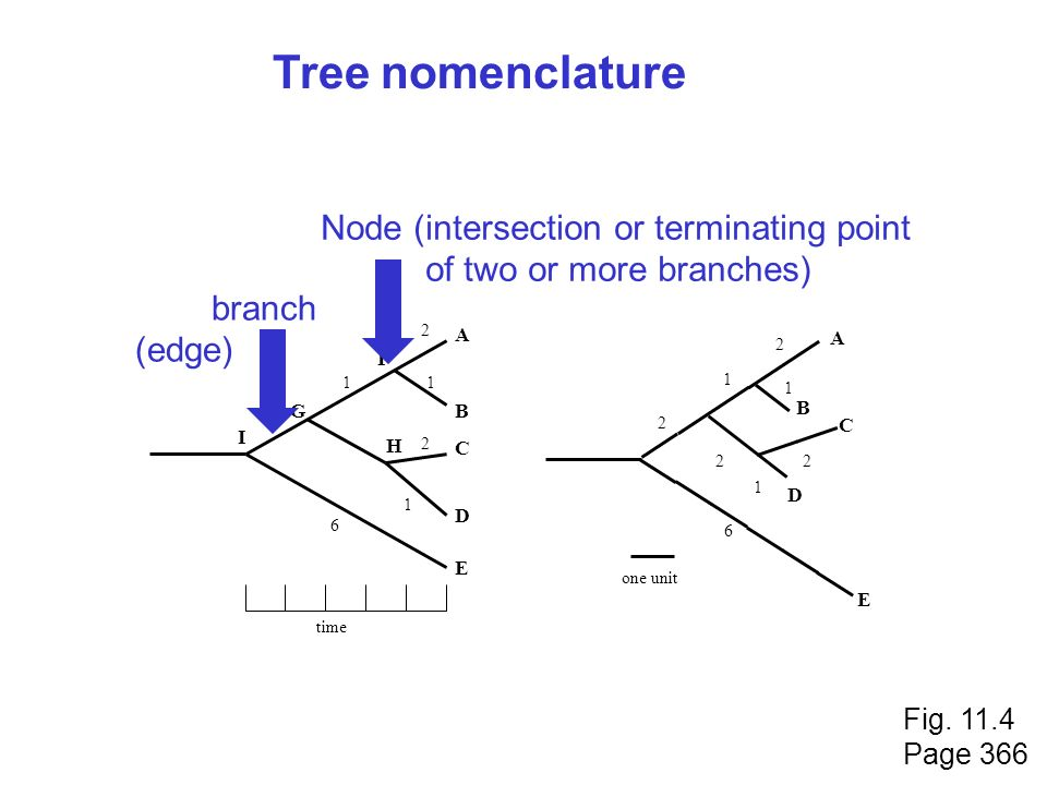Tree nomenclature Node (intersection or terminating point
